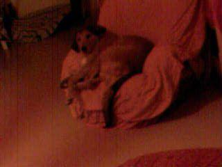 mon chien appolon
