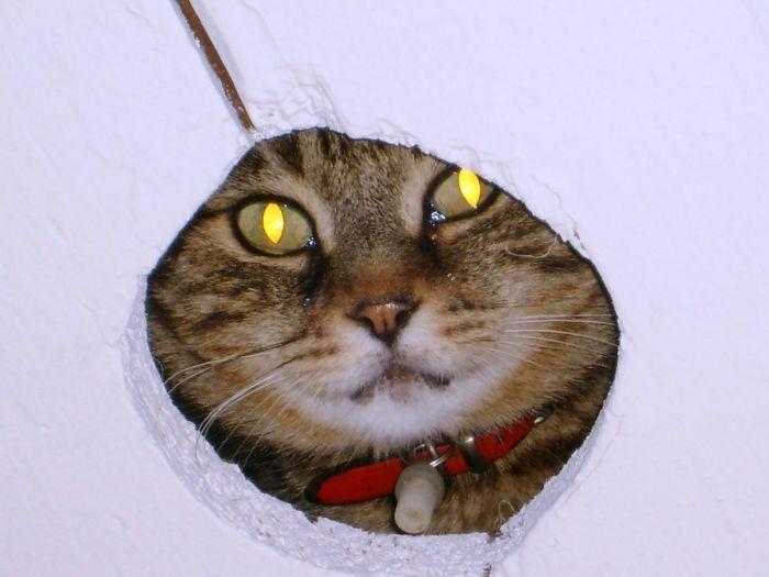 Chat espion !