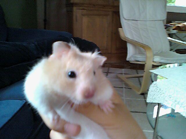 mon autre hamster
