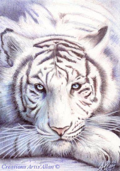 Tigre blanc °o°