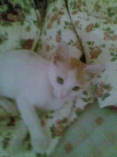 mon chat qui et perdu mickelle