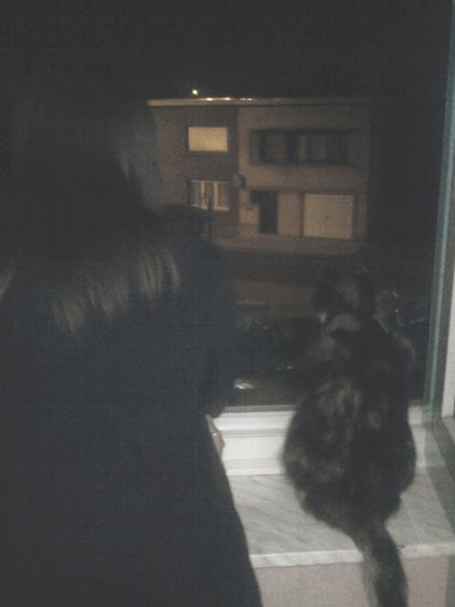 The Cat And Me