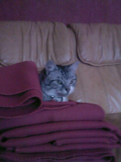 cachée sous les couvertures (L)