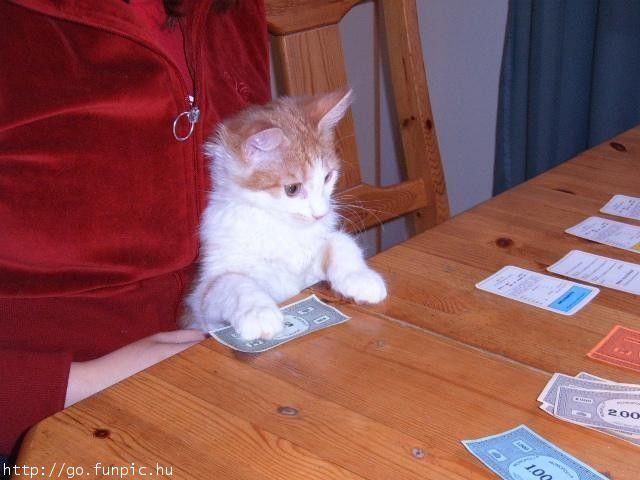 moi jouant au monopoly ^^