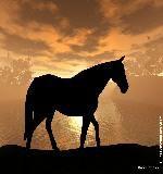 cheval au couché du soleil