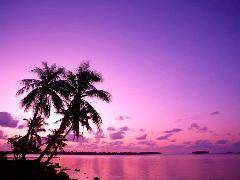 sous les tropics
