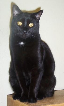 Tipi ma chatte pas-de-race