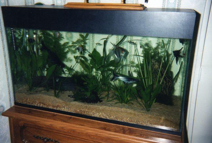 mon premier  aquarium, une autre passion .