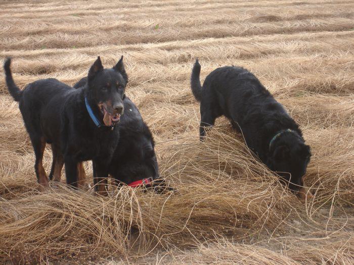 mes chiens que j aime tant