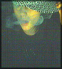 Fumééééé duuuu boooonnn groooosss .. CIGARETTE !!