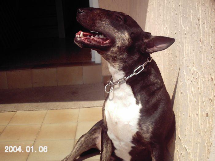 mon bb chien arka