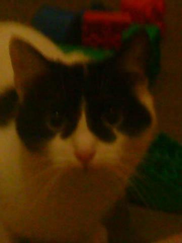 mon chat titoune
