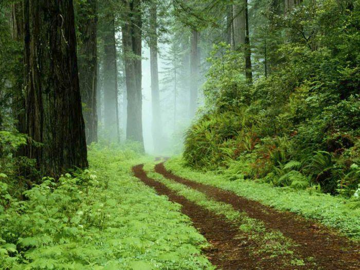 aimer la forêt élément vital de notre existence