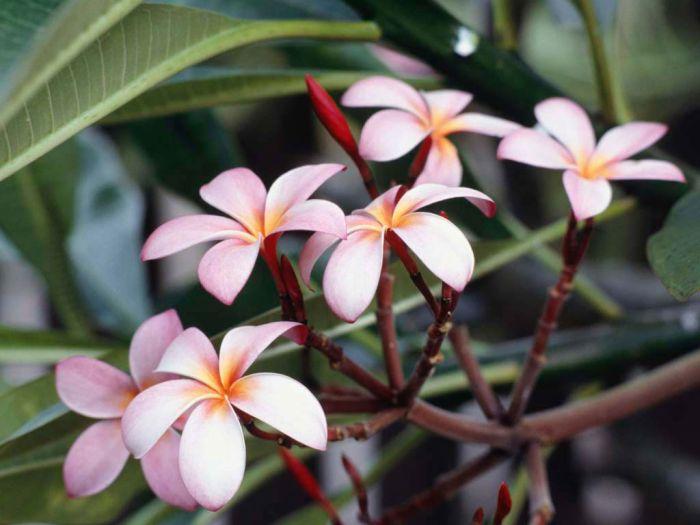 fleur de printemps où tout renait et notre amitiée épanouie