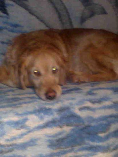 notre chienne, Tennesse, de 7 ans, et 6 MOIS