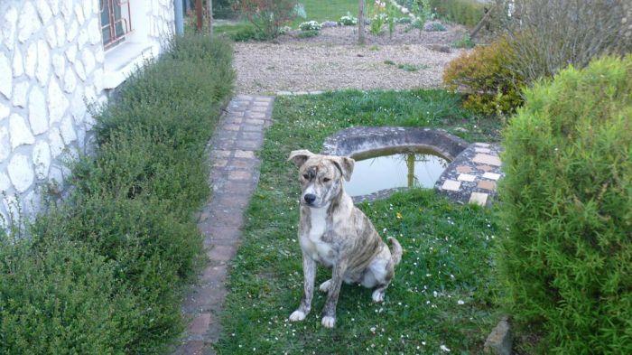 ma chienne! / mon jardin!
