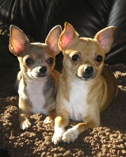 Diego et Maya