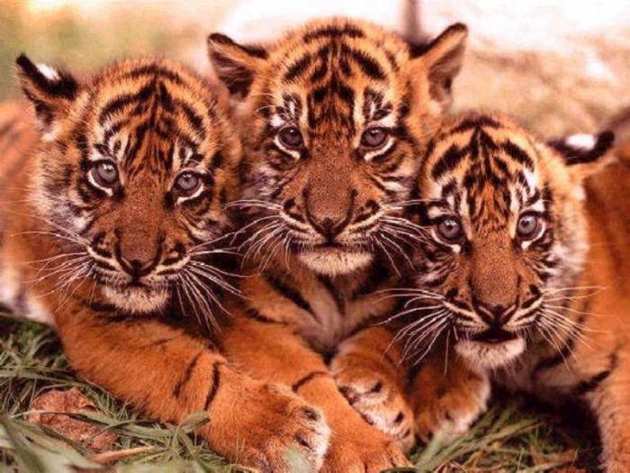 mes animaux préféré