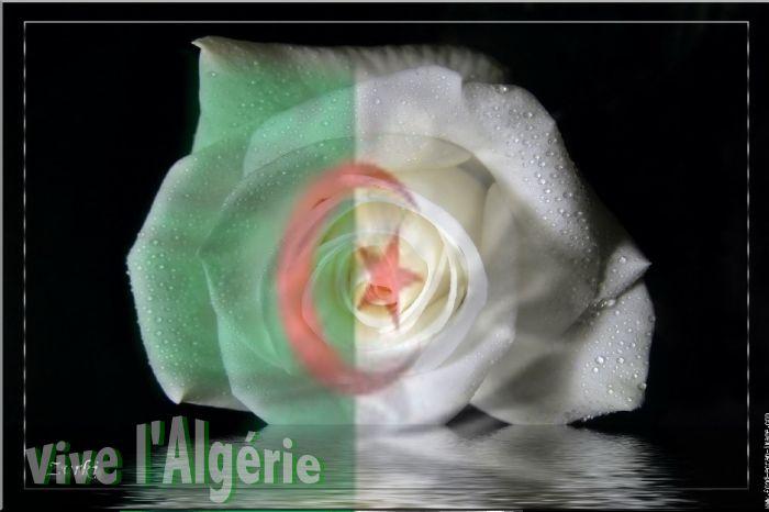 Berriane Algérie ma fleur/ Berriane