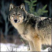 2º animal más lindo del mundo