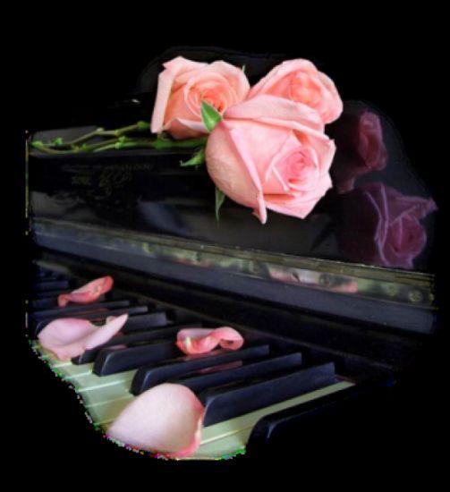 Mélodie d'une rose