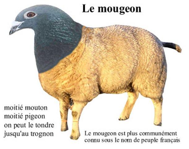 Francais Moyen