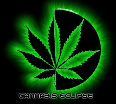 feuille de cannabis