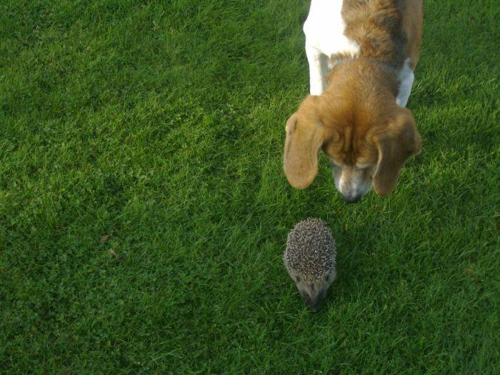 Namur et Cactus : deux amis