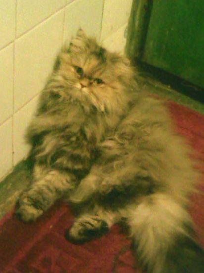 my cat)))