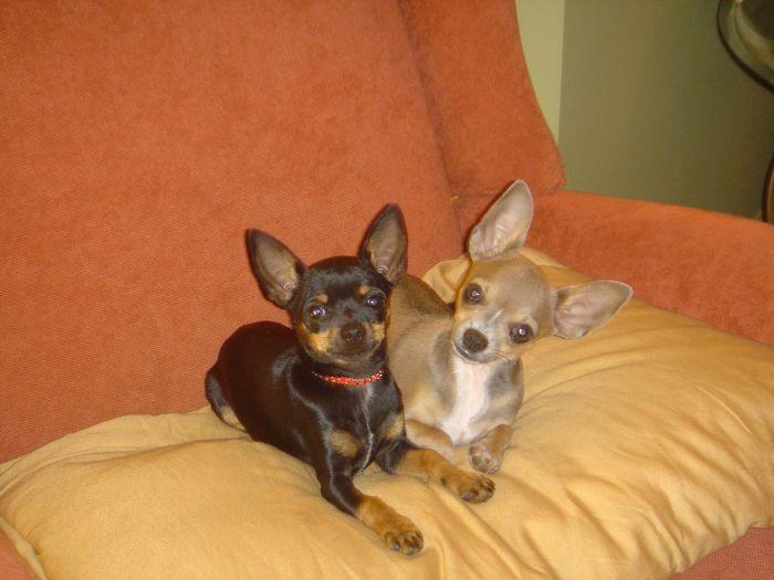Lady et Diego