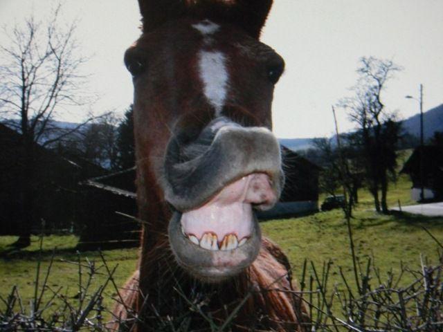 il est bo ce cheval lol il est rigolo ossi