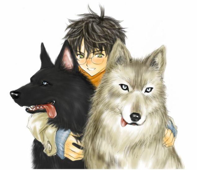 Harry, Sirius et James