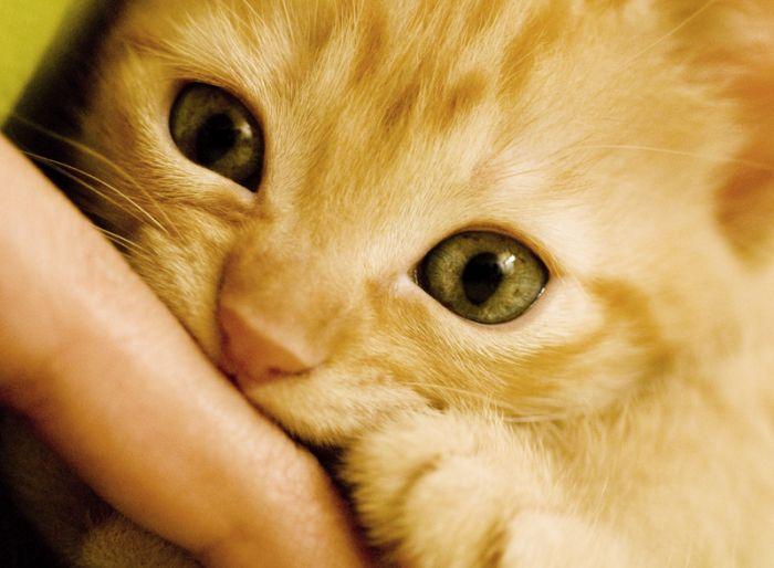 Kitten =)