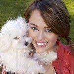 Miley et son chien