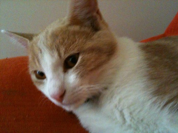 Natty mon chat !