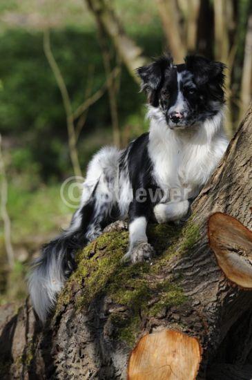 ce chien a grimper dans l'arbre pour enviter les chinnois