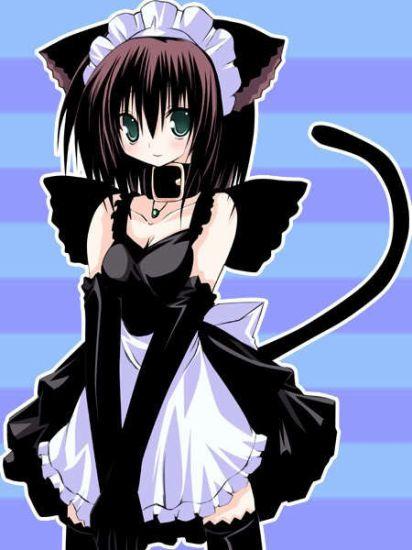 LOVE neko maid LOVE!!!!