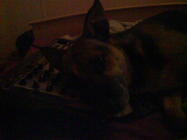 vielle mp7 servant de coussin a mon chien