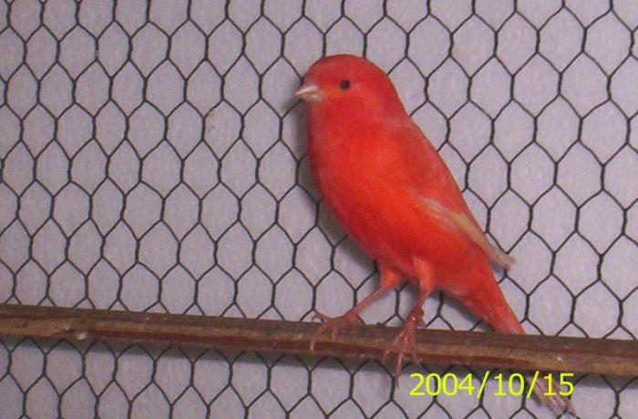 a 2004 red hen
