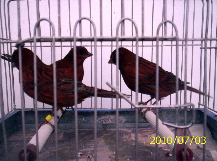 2010 black cobalt intense red