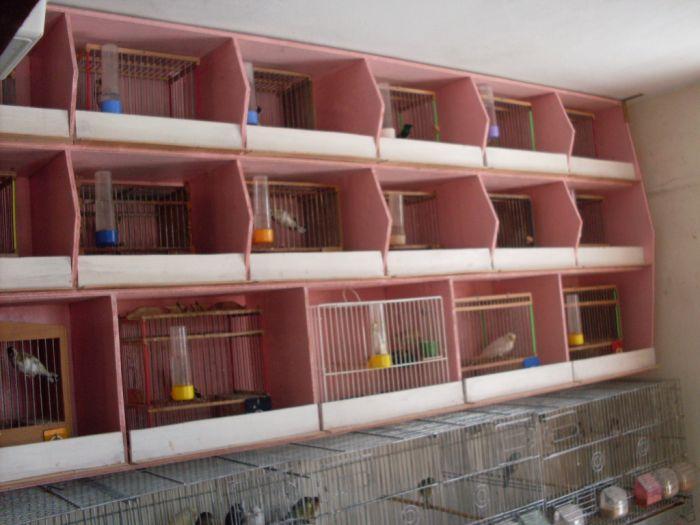 """ma chambre d""""élevage"""