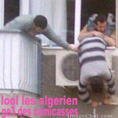 les algerien camicasses