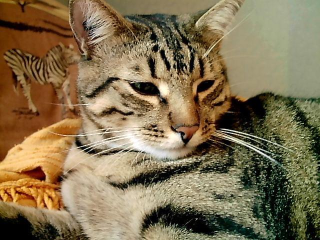 dalai mon ancien chat