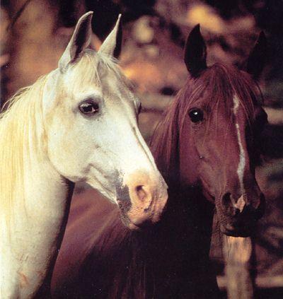 2 chevaux