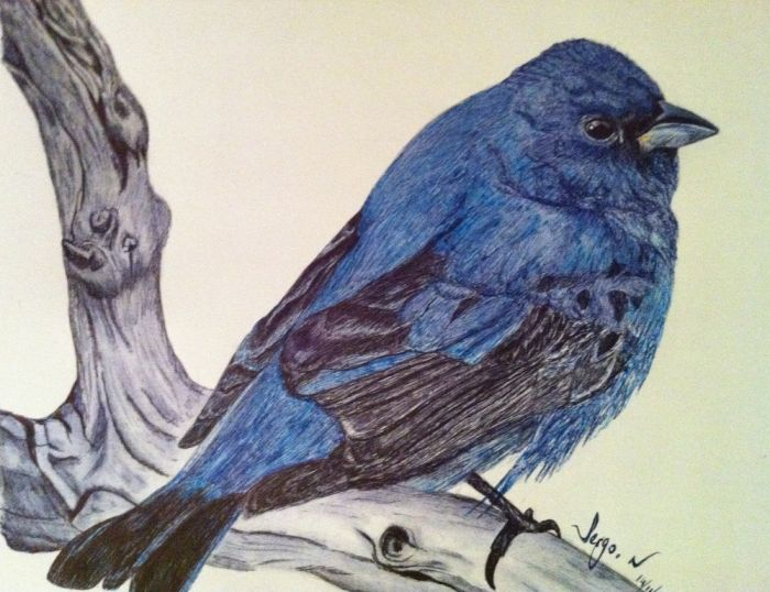 Stylo bic bleu et bic noir, format A3