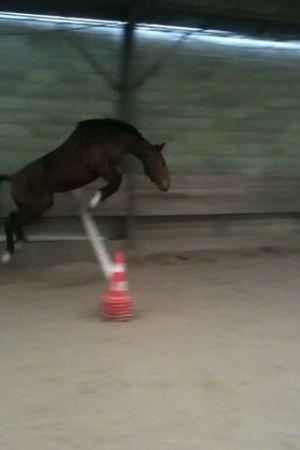 Juste mon cheval <3
