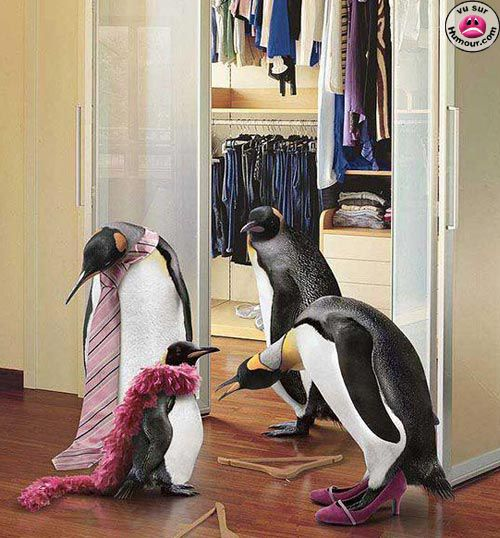 le papa pingouin ;p
