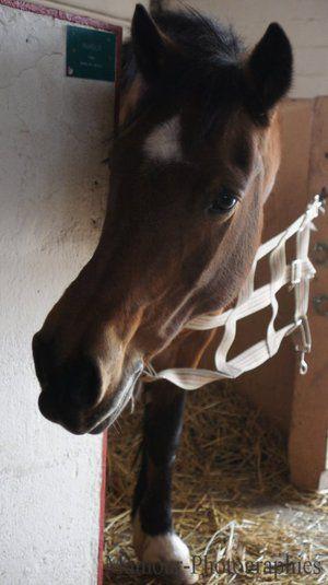 ♥ Wonderful little Pony....<3