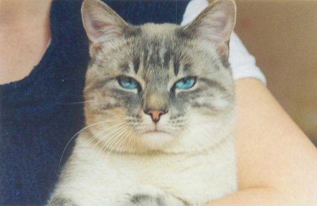 mon chat qui a disparu 2004 europe un croisée chat moi