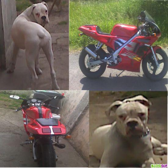 tu touche a la moto je te croque et j espere que tu cour vit